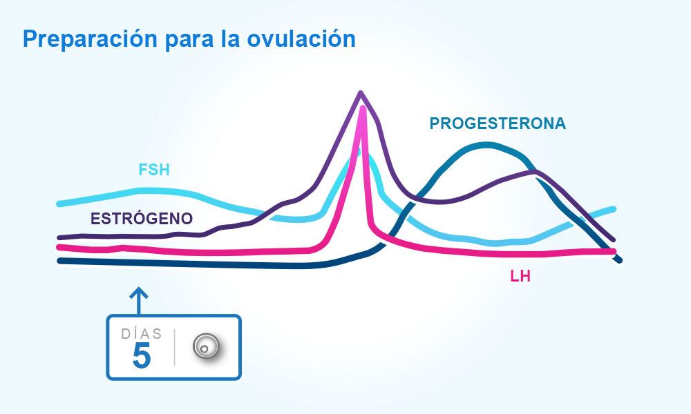 los dias fertiles y la ovulacion es lo mismo