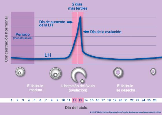 duracion de la ovulacion en una mujer