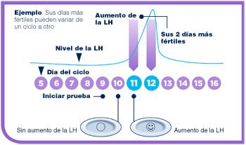 dias de ovulacion calcular